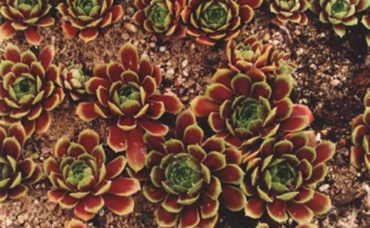многолетние цветы для сада фото.